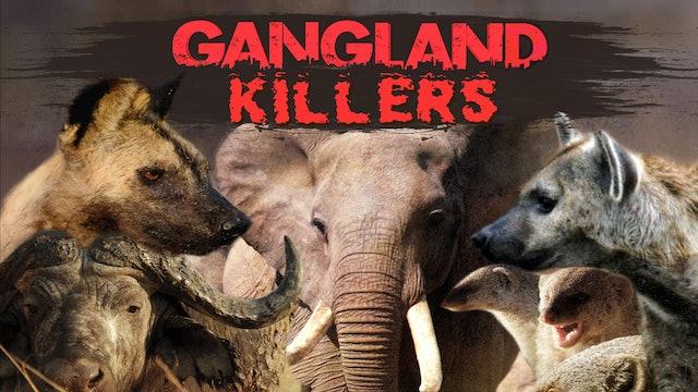Gangland Killers