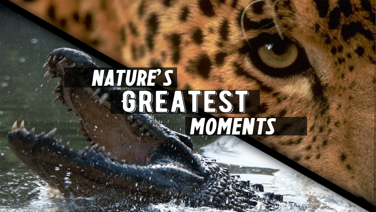 Nature's Greatest Moments