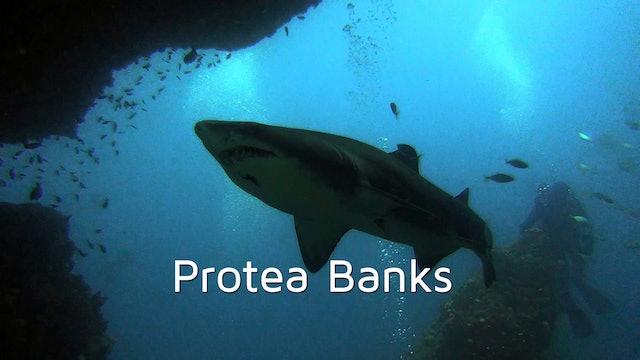 DA06 - Protea Banks