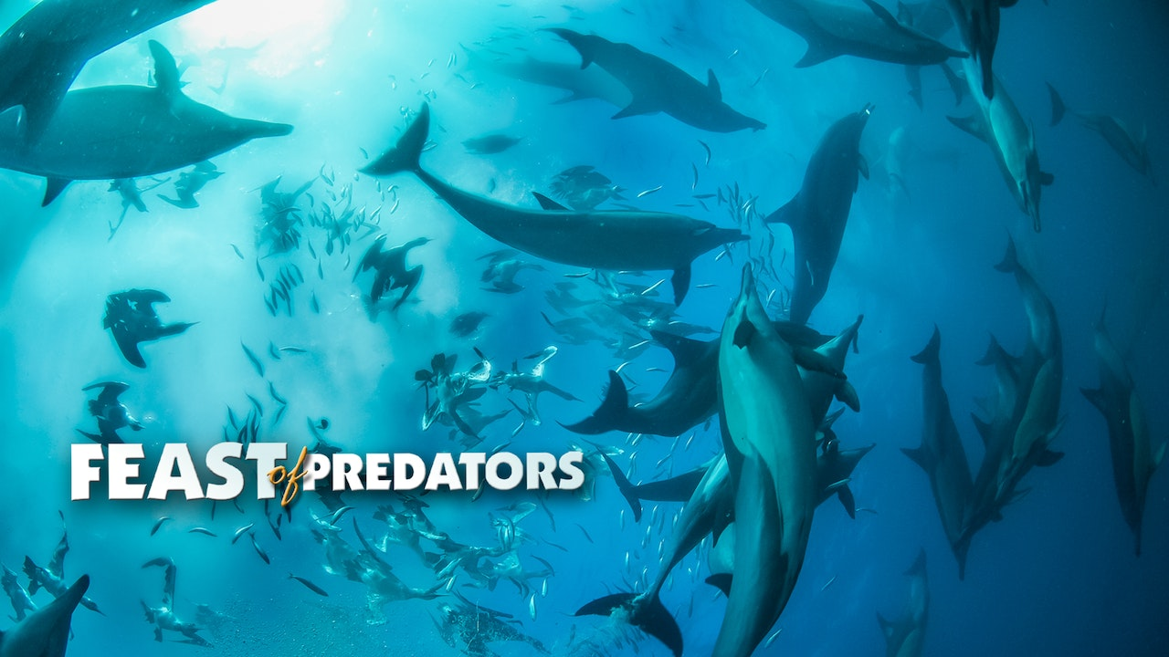 Feast of Predators