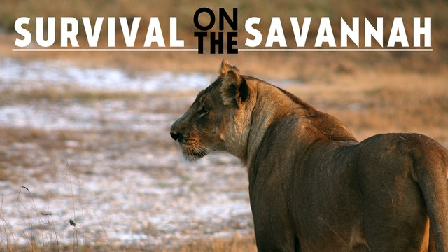 Survival on the Savannah