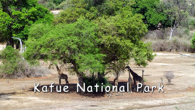 WZ01 - Kafue National Park