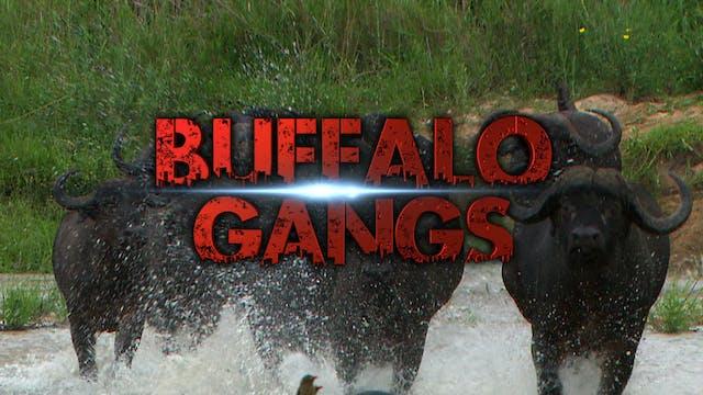 Buffalo Gangs