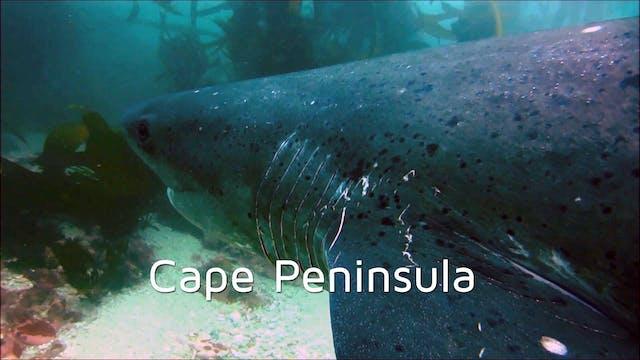 DA09 - Cape Peninsula