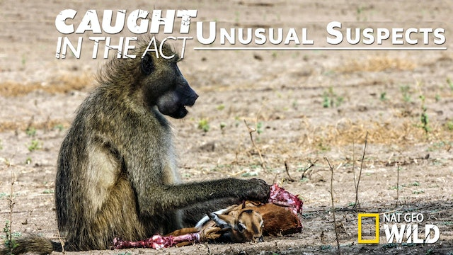 Caught in the Act: Unusual Suspects