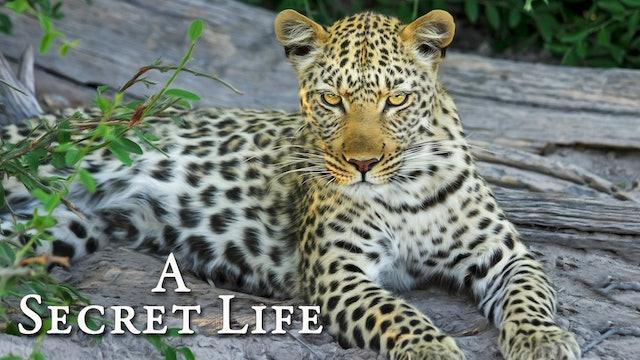 A Secret Life - Part 2