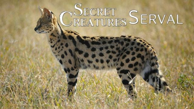 Secret Creatures : Serval