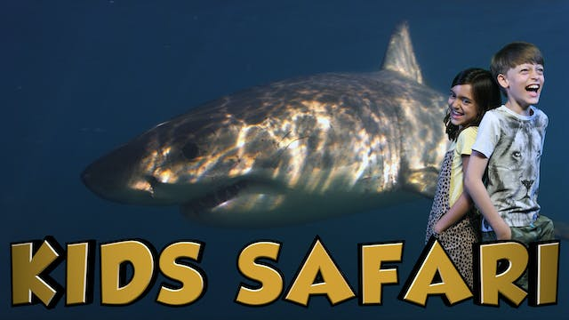 OCEAN KIDS SAFARI - GREAT WHITE SHARKS