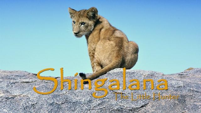 Shingalana learning to hunt - EP4