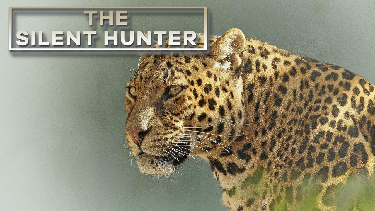 The Silent Hunter