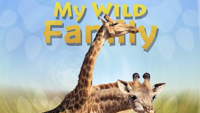 MWF207 - Baby Giraffe