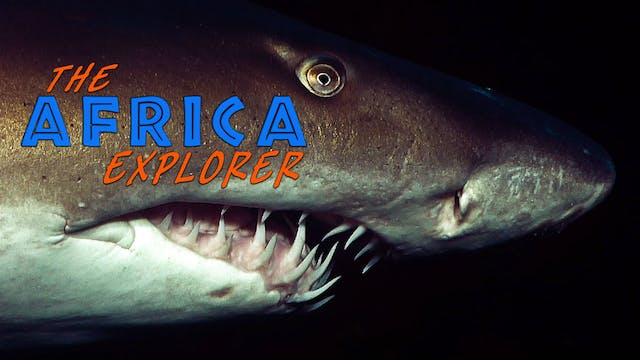 AE07 - The Enigmatic life of Sharks