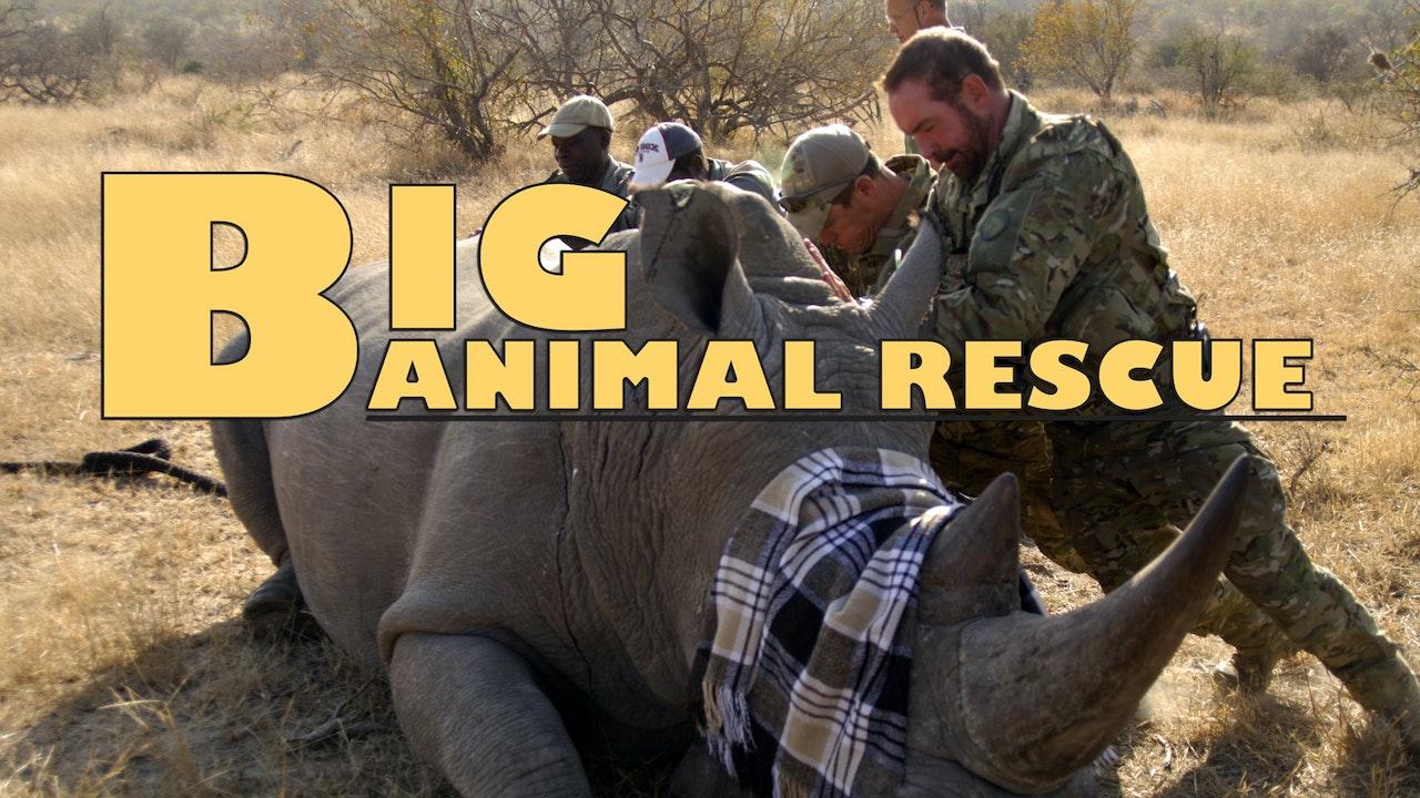 Big Animal Rescue