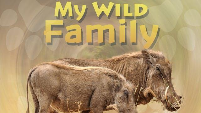 MWF203 - Baby Warthog