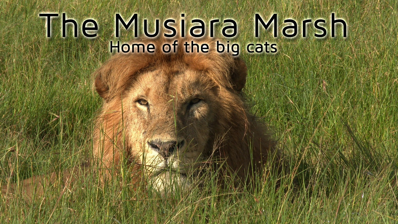 The Musiara Marsh