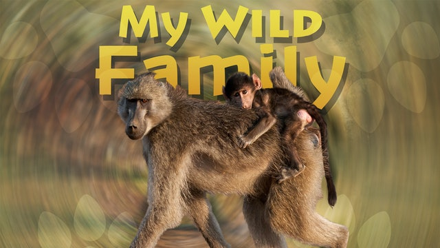 MWF109 - Baby Baboon