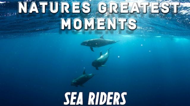 NGM102 - Sea Riders