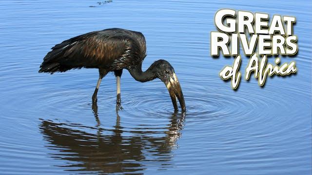GROA04 - Okavango the miracle river