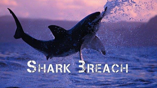Great White Shark Breach