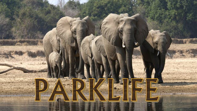 PL13 - Elephant Families & Wahlberg E...