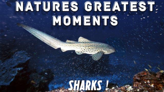 NGM110 - Sharks!