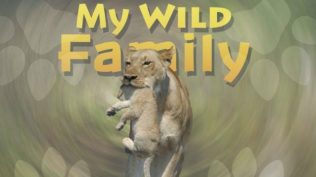 MWF101 - Baby Lion