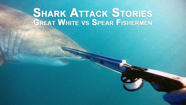Shark attack stories - Spear Fisherme...