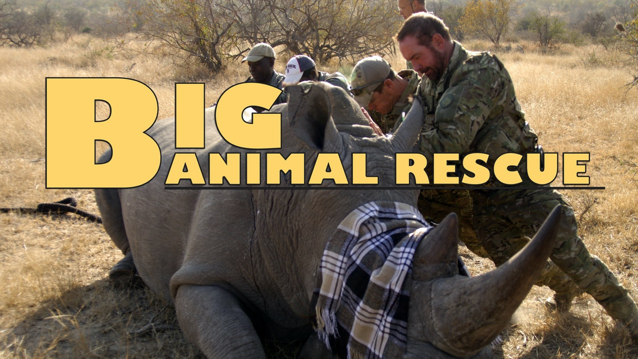 Big Animal Rescue