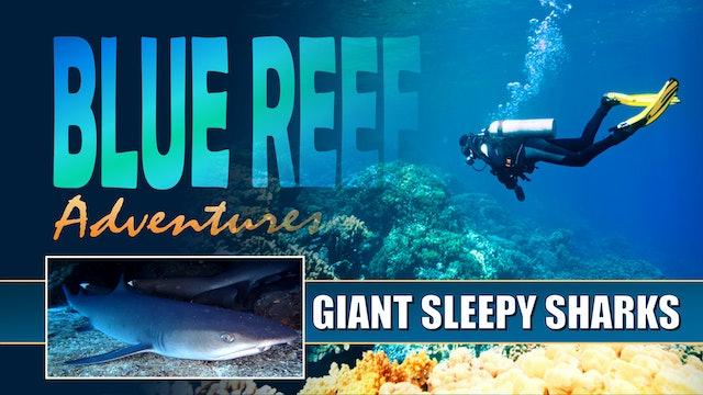 BRA11 - Giant Sleepy Sharks