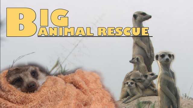 BAR09 - Meerkat Rescue