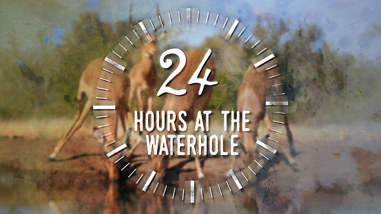 24 Hours at the Waterhole