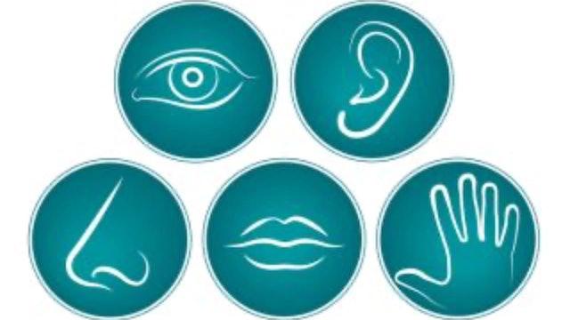 The Five Senses (Meditation Aged 10+)
