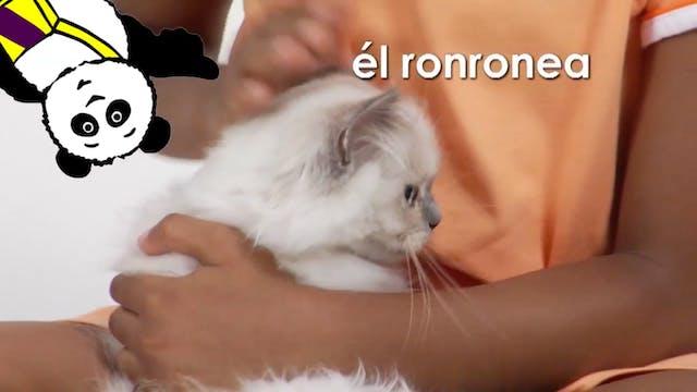 Spanish Volume 1 - Episode 12