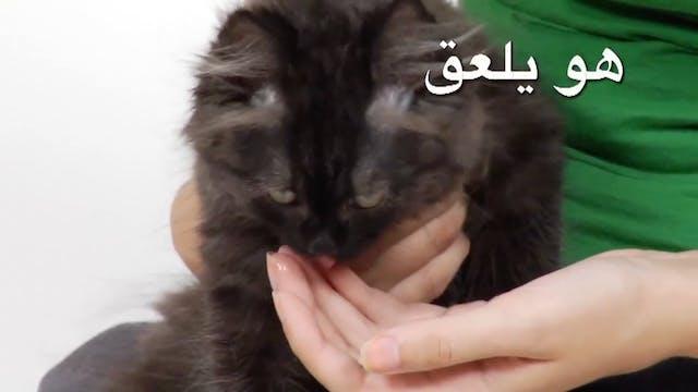 Arabic Volume 1 - Episode 7