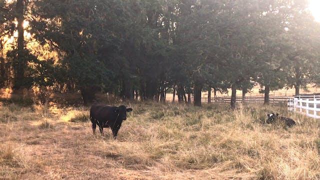 Pasture 1