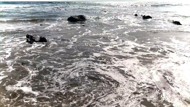 Ocean 31