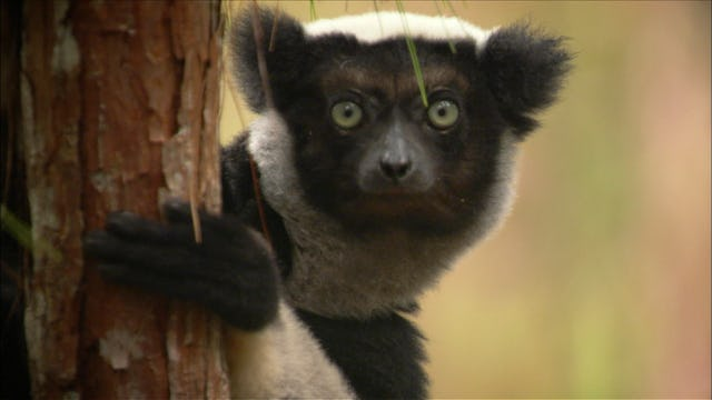 Madagascar: The Island of Monsters