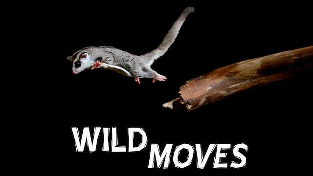 Wild Moves