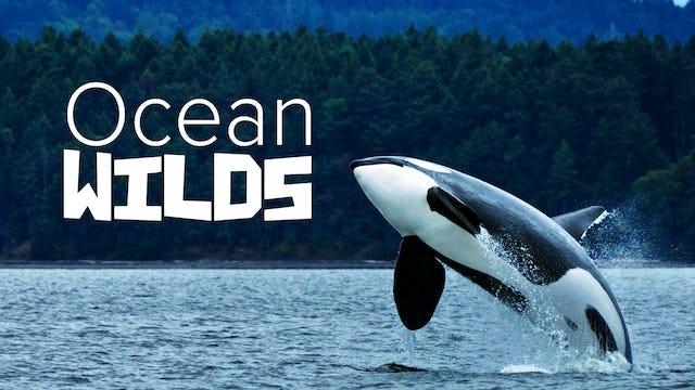 Ocean Wilds