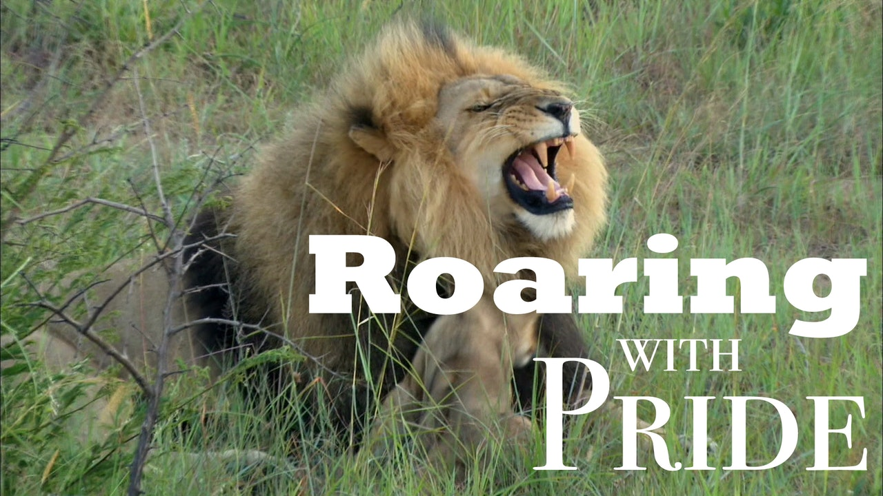 Roaring With Pride