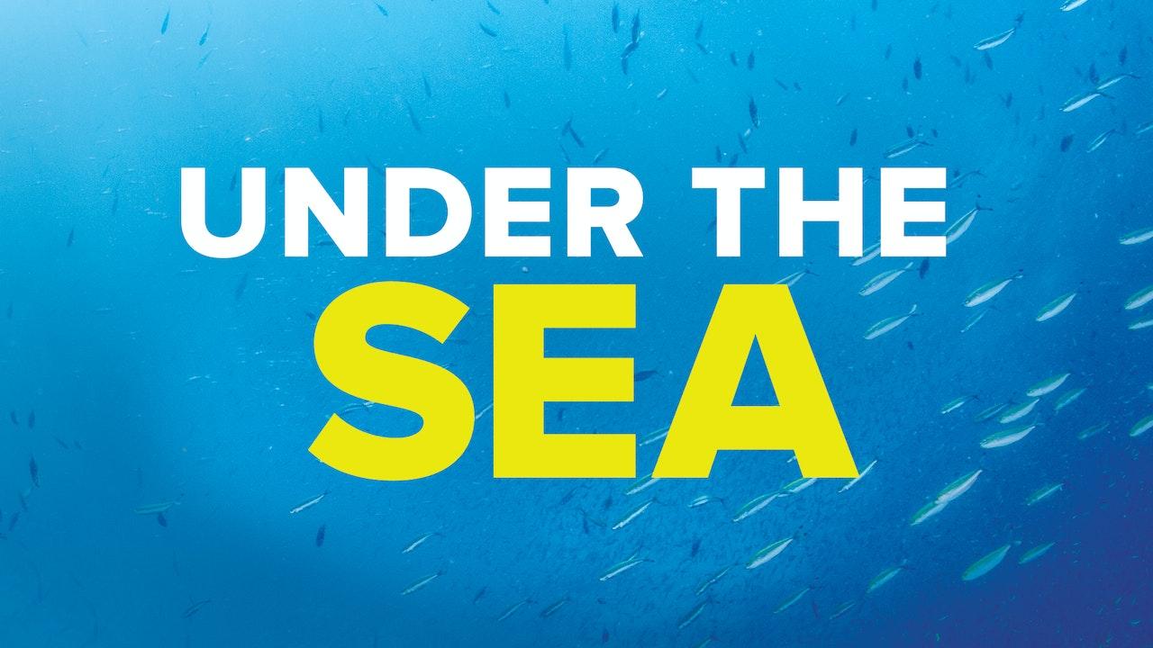 Under The Sea Blurred