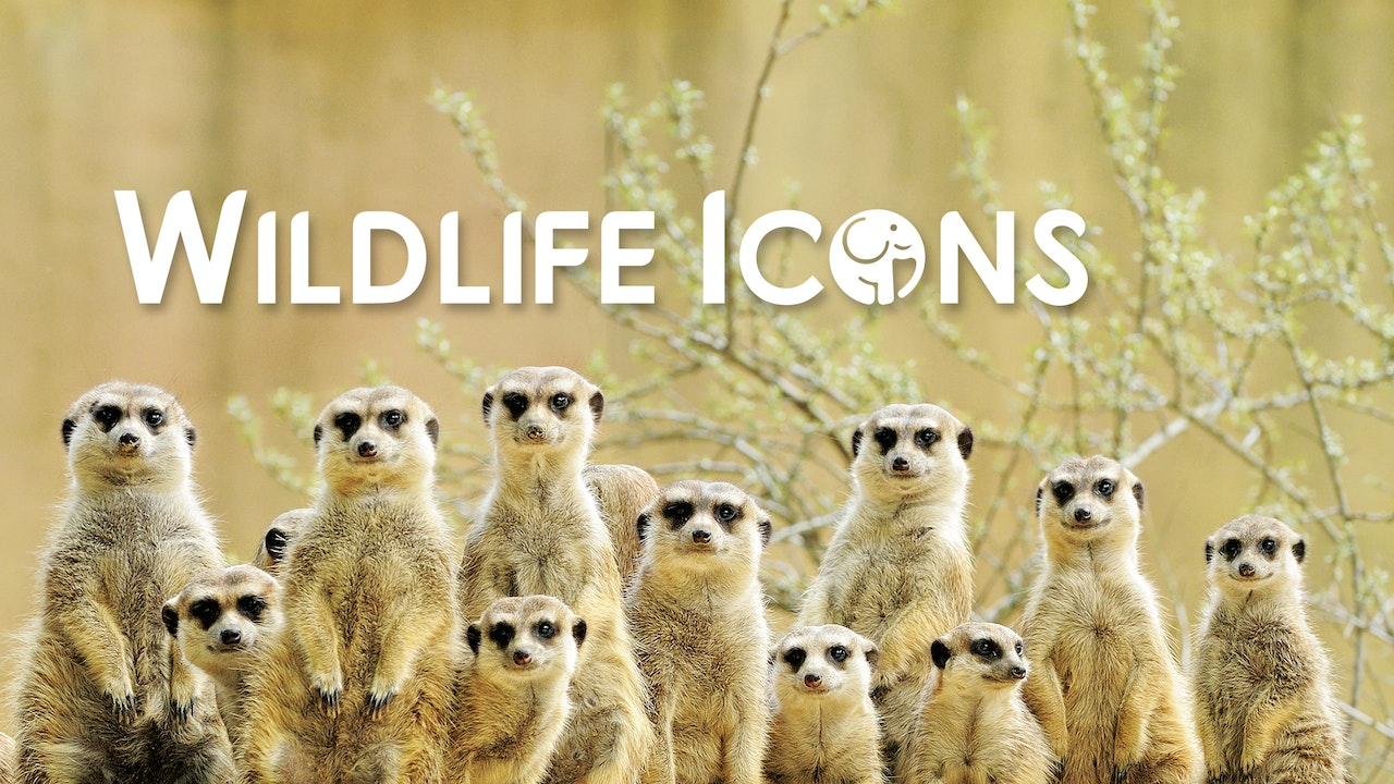 Wildlife Icons