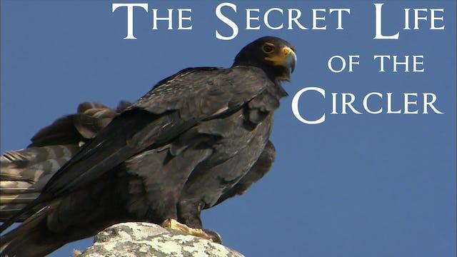The Secret Life of the Circler