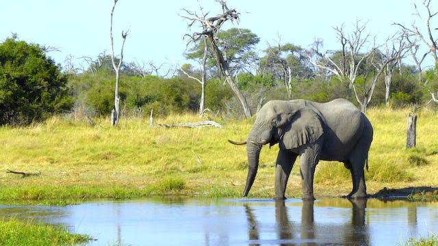 Africas Great Oasis–The Okavango
