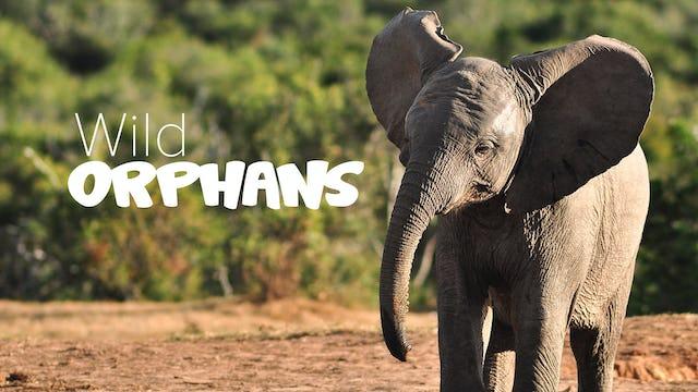 Wild Orphans