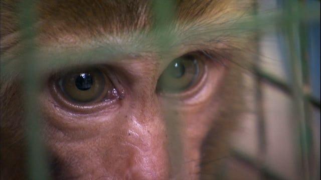 The Monkey Catcher