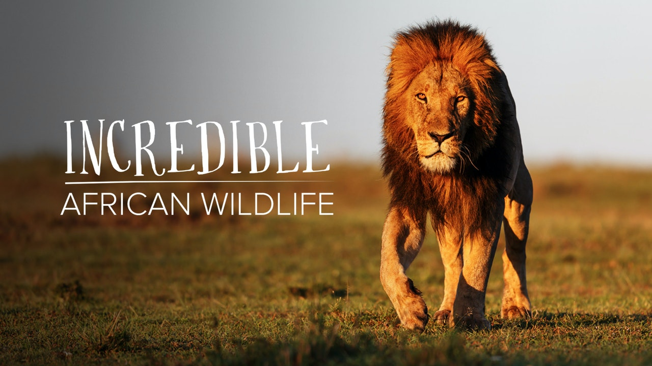 Incredible African Wildlife