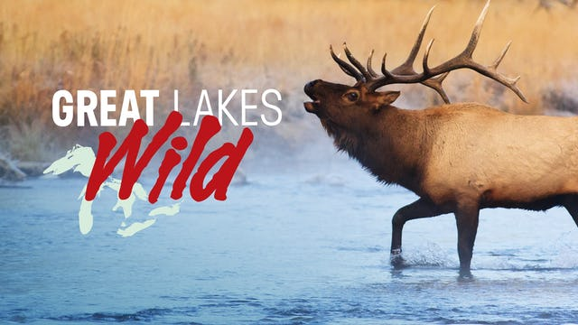 Great Lakes Wild
