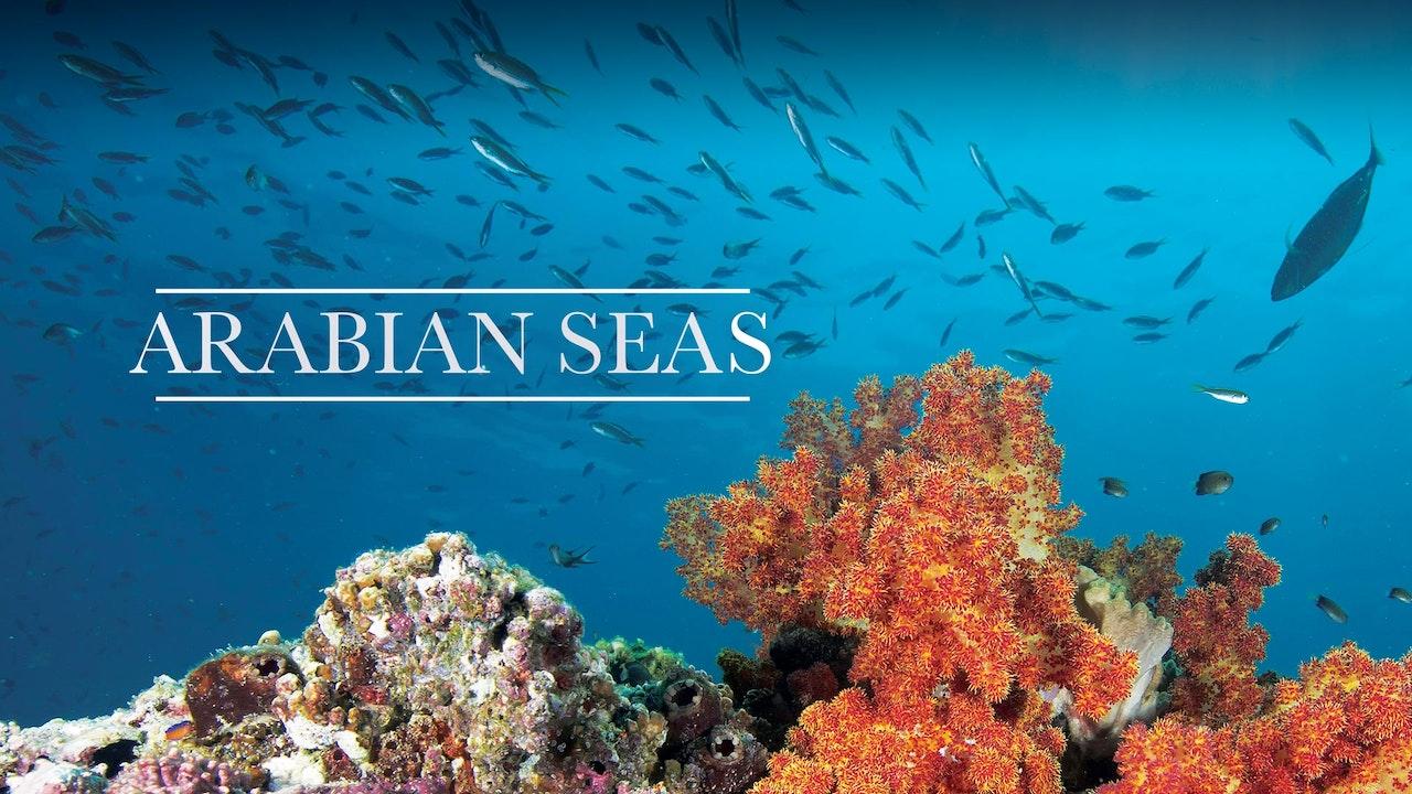 Arabian Seas