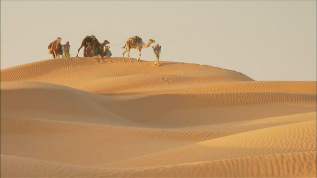 Sahara: Life On The Edge